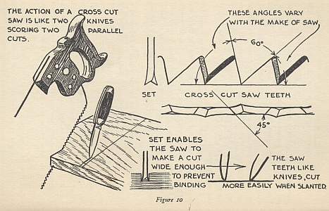 anatomy of crooscut saw